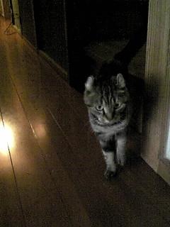 セカンドハウスの猫